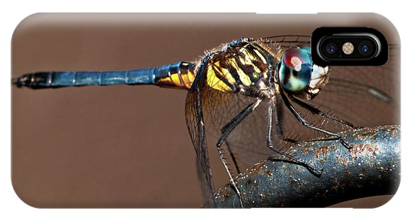 Blue And Gold Dragonfly IPhone Case