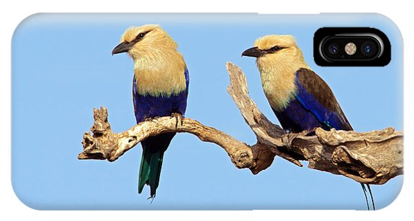 Blue-bellied Rollers On Branch  IPhone Case