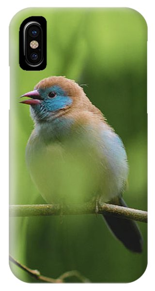 Blue Bird Chirping IPhone Case