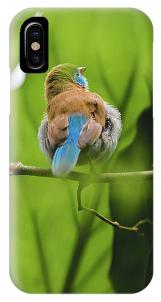 Blue Bird Has An Itch IPhone Case