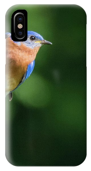 Blue Bird IPhone Case