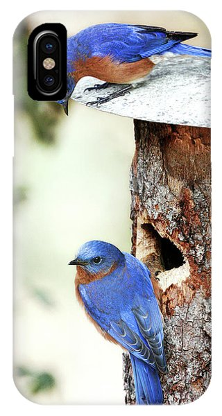 Blue Birds Are Moving In IPhone Case