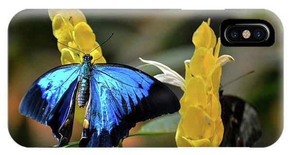 Blue Beauty Butterfly IPhone Case