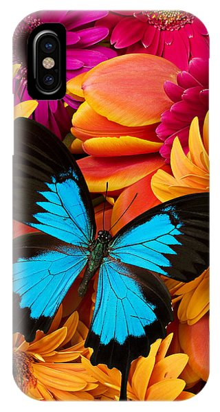 Colorful iPhone Case - Blue Butterfly On Brightly Colored Flowers by Garry Gay