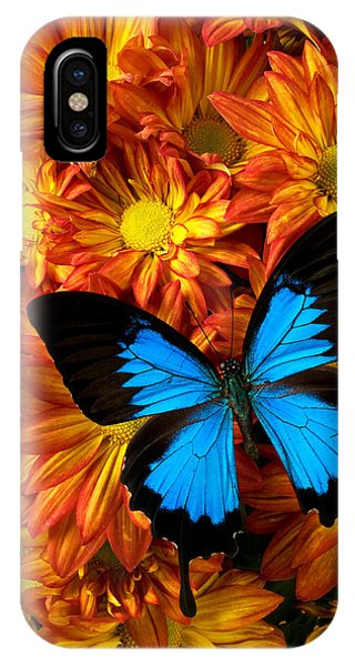 Pollination iPhone Case - Blue Butterfly On Mums by Garry Gay