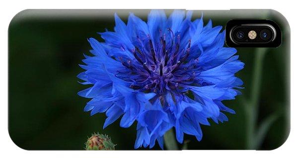 Blue Cornflower IPhone Case