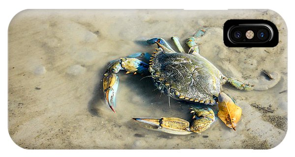 IPhone Case featuring the photograph Blue Crab by Sandy Adams