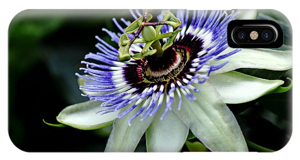 Blue Crown Passion Flower IPhone Case