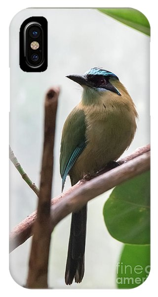 Blue-crowned Motmot IPhone Case