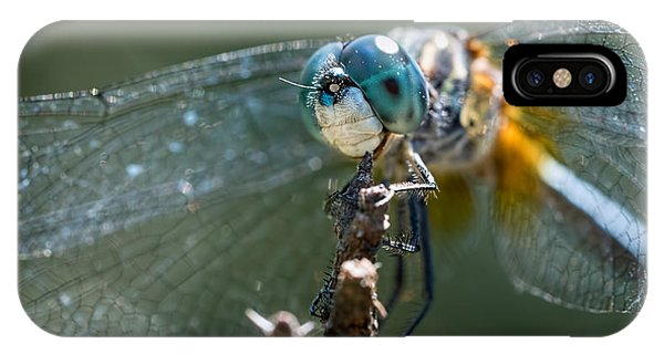 Blue Dasher Dragonfly IPhone Case