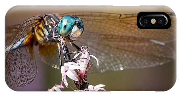 Blue Dasher Dragonfly Resting IPhone Case