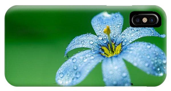 Blue Eyed Grass Flower IPhone Case