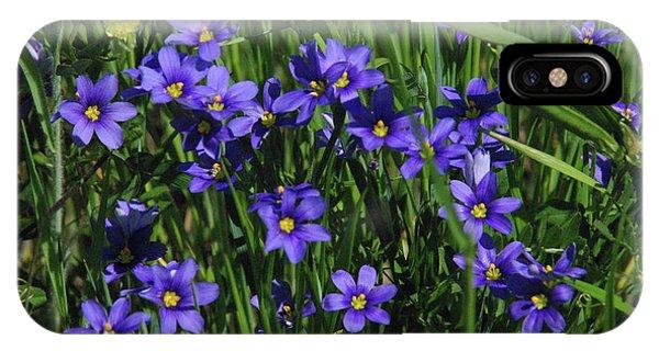 Blue Eyed Grass IPhone Case