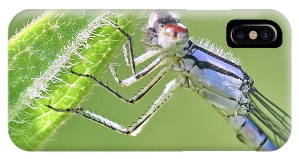 Blue Fronted Dancer Damselfly IPhone Case