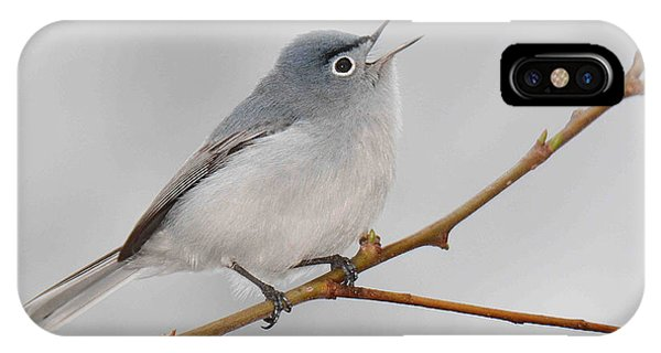 Blue-gray Gnatcatcher IPhone Case