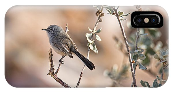 Black-tailed Gnatcatcher IPhone Case