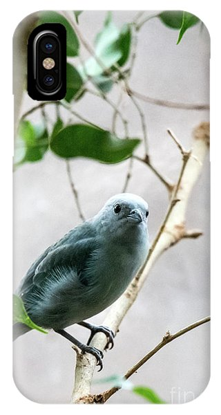 Blue-grey Tanager 2 IPhone Case