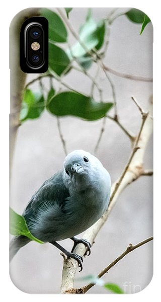 Blue-grey Tanager IPhone Case