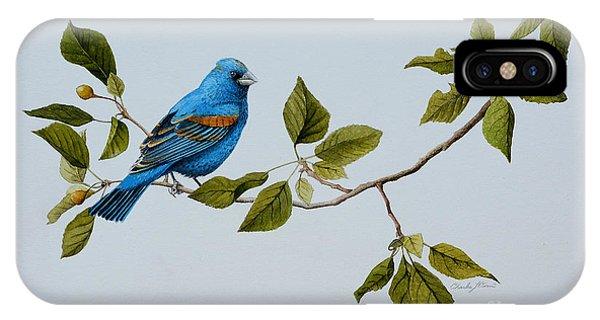 Blue Grosbeak IPhone Case