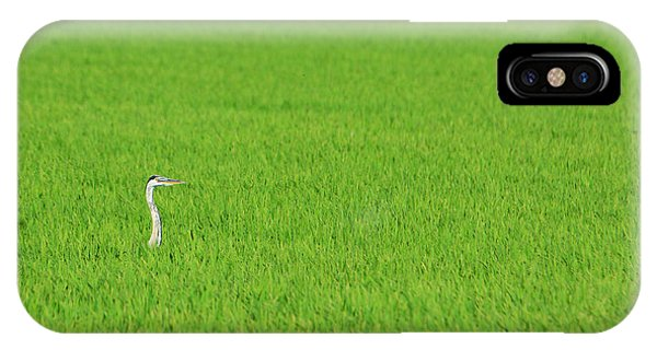 Blue Heron In Field IPhone Case