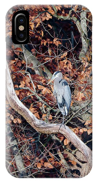 Blue Heron In Tree IPhone Case