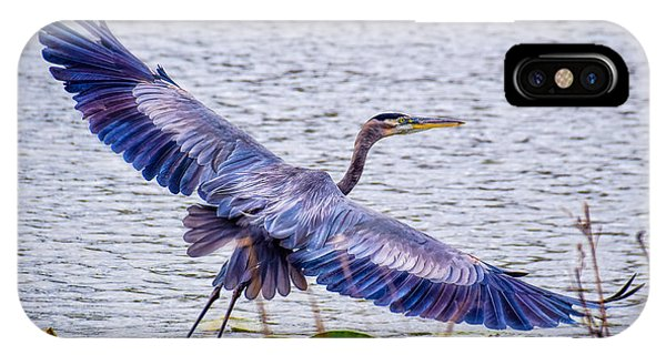 Blue Heron  Take Off  IPhone Case