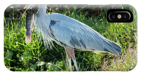 Blue Heron With Fish IPhone Case