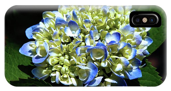 Blue Hydrangea Onstage 2620 H_2 IPhone Case