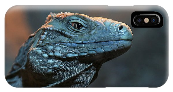 Blue Iguana IPhone Case