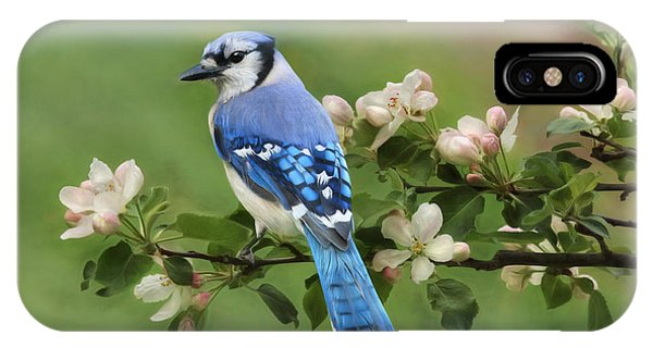 Blue Jay And Blossoms IPhone Case