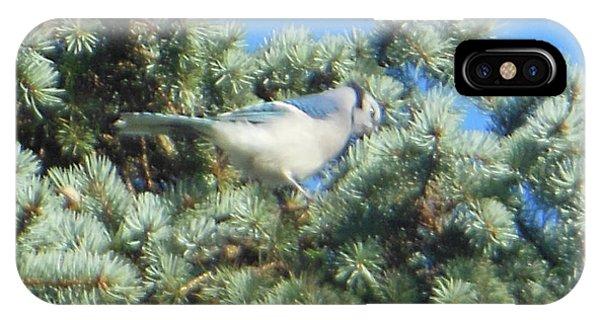 Blue Jay Colorado Spruce IPhone Case