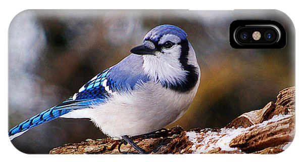 Blue Jay Day IPhone Case