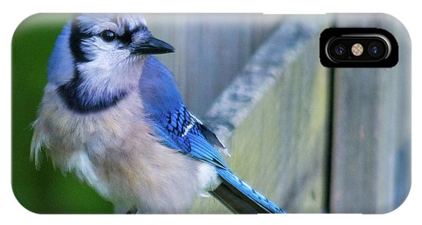 Blue Jay Fluffed IPhone Case