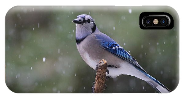 Blue Jay In Falling Snow IPhone Case