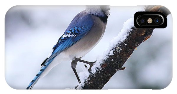 Blue Jay In Snow IPhone Case