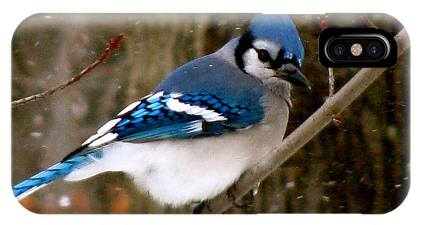 Blue Jay In The Snow IPhone Case