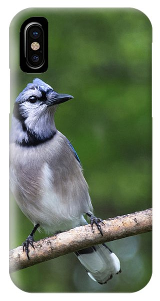 Blue Jay On Alert IPhone Case