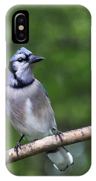 Blue Jay On Alert IPhone Case