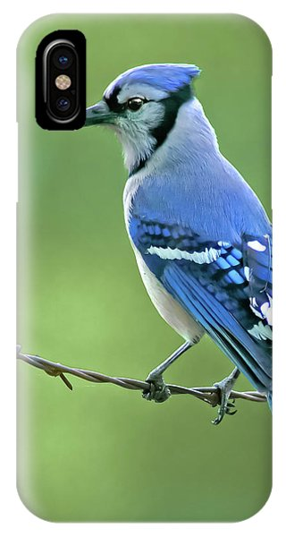 Blue Jay On The Fence IPhone Case