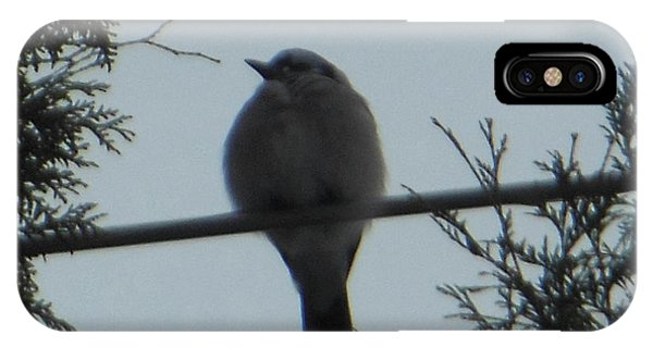 Blue Jay On Wire IPhone Case