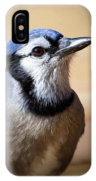 Blue Jay Portrait IPhone Case