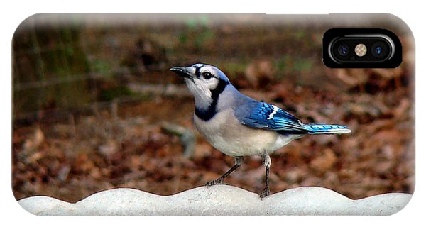 Blue Jay Strikes A Pose IPhone Case