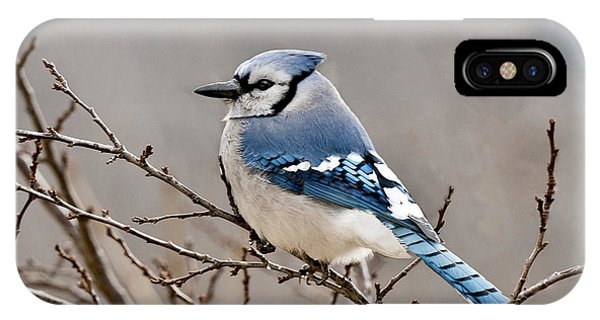 Blue Jay Way IPhone Case