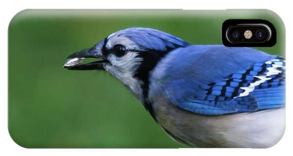 Blue Jay With Seed IPhone Case
