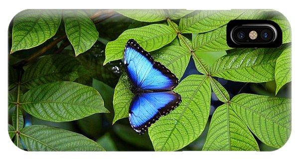 Blue Leaves - Morpho Butterfly IPhone Case