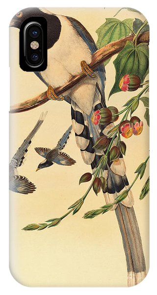Magpies iPhone Case - Blue Magpie, Urocissa Magnirostris by John Gould