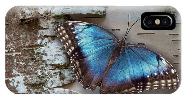 Blue Morpho Butterfly On White Birch Bark IPhone Case