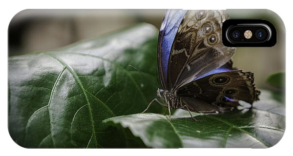 Blue Morpho On A Leaf IPhone Case