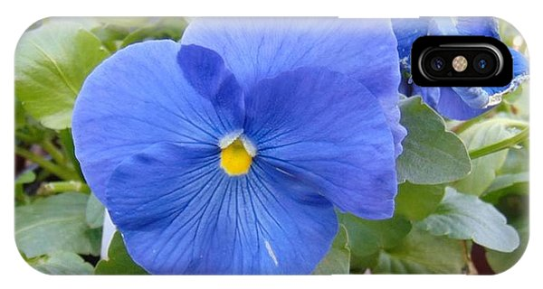 Blue Pansy Flower IPhone Case