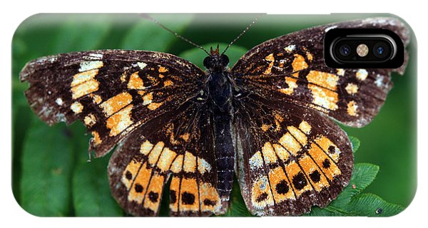Blue Ridge Butterfly IPhone Case